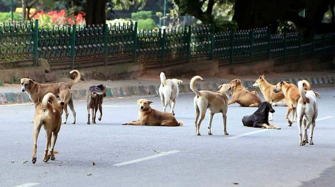 Free Pet Dogs In Coimbatore