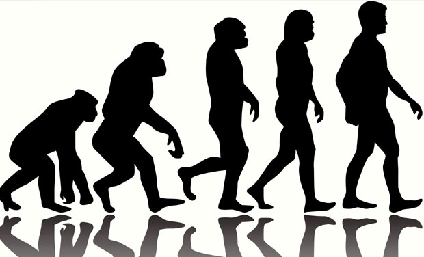 Human body has gone through four stages of evolution: study