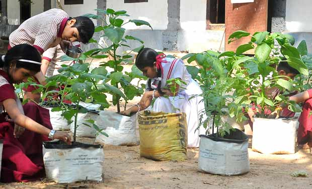 Andhra pradesh and south india in pictures january 23 for Terrace vegetable garden kerala