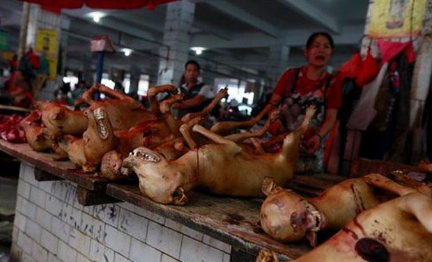 Stop Dog Eating Food Off Street
