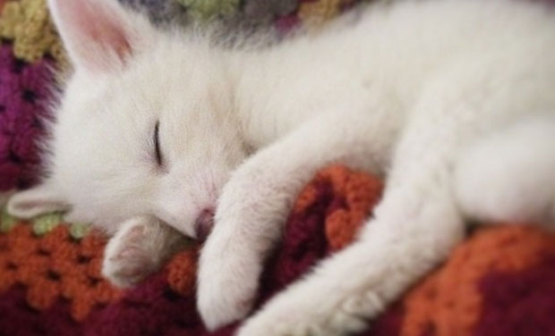 Meet rylai the pet fox who will melt your heart - Pink fox instagram ...